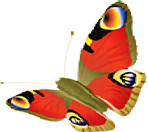 Schmetterling_hc_web_t